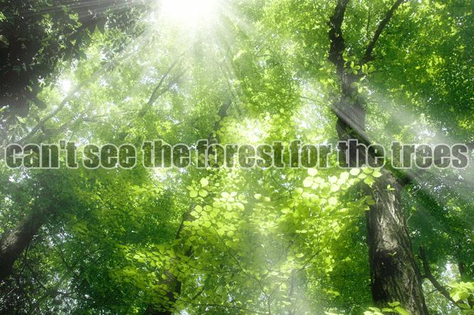 140303kame_forest