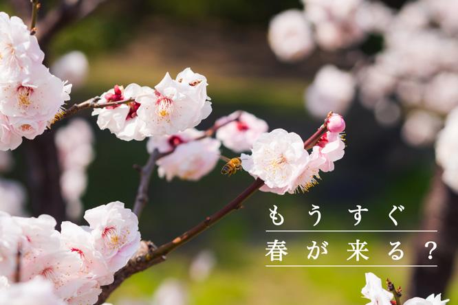 180123_uwaki_top