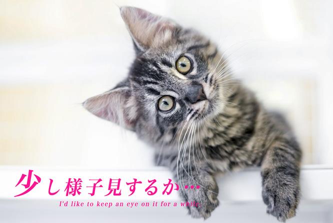 fx_180214_yousumi_666